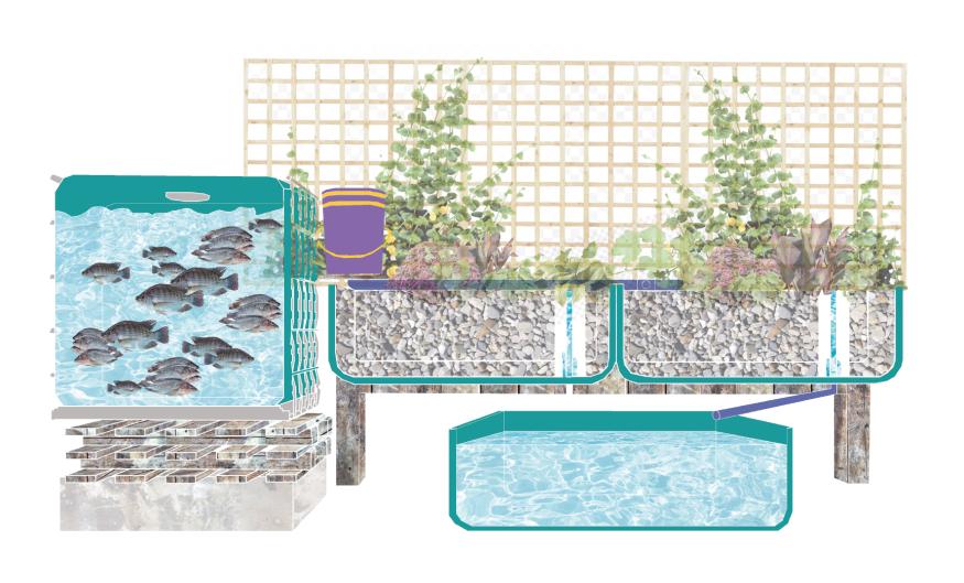 A section cut through the family aquaponics unit.